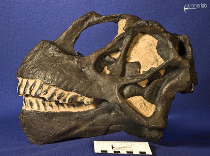 camarasaurus_DSC_9021.jpg