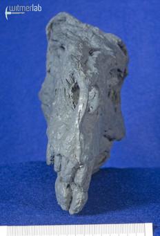Herrerasaurus_DSC_7503.JPG