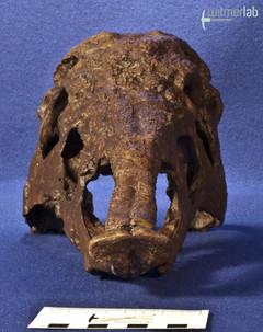 desmatosuchus_DSC_1746.JPG