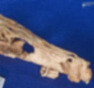 velociraptor_PIN_DSC_7566.JPG