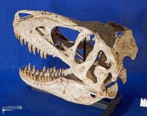 tarbosaurus_DSC_9086.JPG