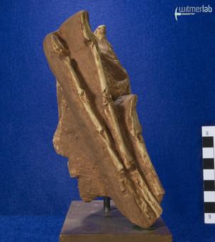 oviraptor_DSC_7802.JPG