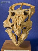 archaeoceratops_DSC_1222.JPG