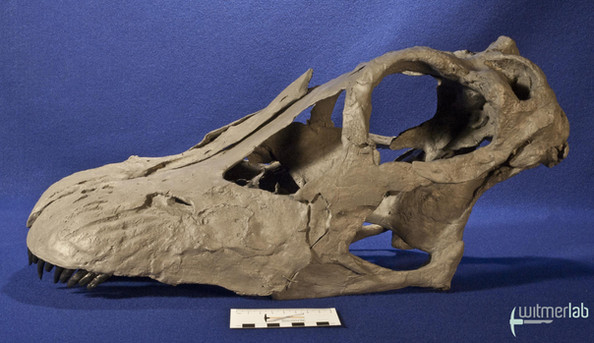 apatosaurus_DSC_1817.JPG