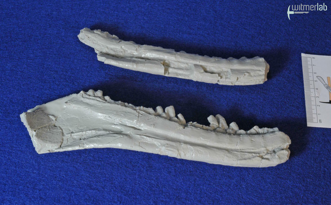 Marshosaurus_DSC_9279.JPG