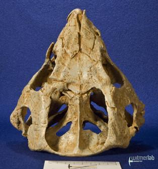 auroraceratops_DSC_1196.JPG