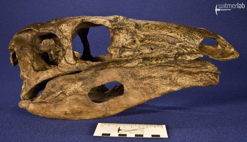 stegosaurus_DSC_9841.JPG