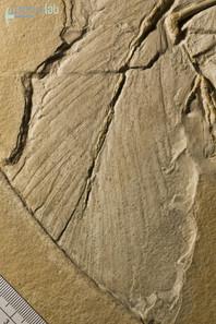 archaeopteryx_DSC_8386.JPG