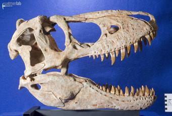 tarbosaurus_DSC_9062.jpg