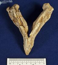 archaeoceratops_DSC_1438.JPG