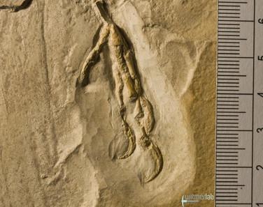 archaeopteryx_DSC_8375.JPG
