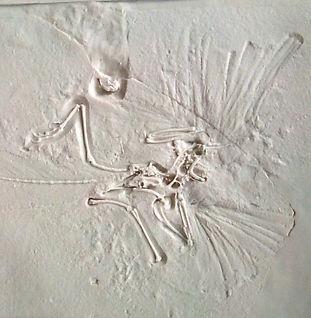 Archaeopteryx London01.JPG