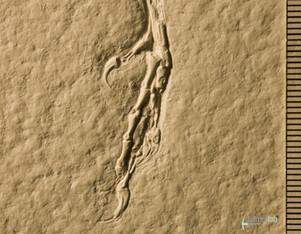 archaeopteryx_sp_DSC_8443.JPG