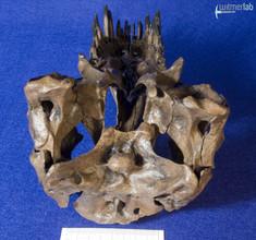 tyrannosaurus_stan_DSC_8795.JPG