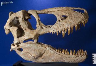 tarbosaurus_DSC_9063.JPG