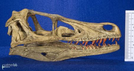 Velociraptor_Sculpture_DSC_8144.JPG