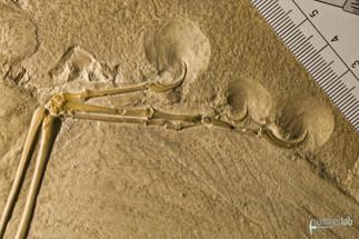 archaeopteryx_DSC_8349.JPG