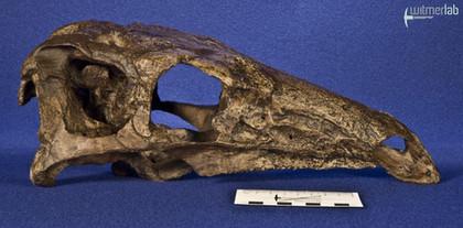 stegosaurus_DSC_9734.JPG