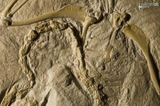 archaeopteryx_DSC_8354.JPG