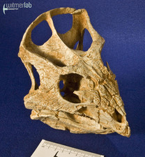 archaeoceratops_DSC_1376.JPG