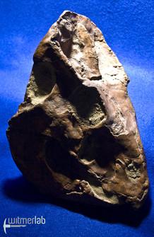 leptoceratops_DSC_0968.JPG