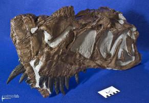 ceratosaurus_DSC_2331.JPG