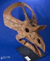 zuniceratops_DSC_2459.JPG