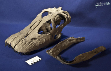 apatosaurus_DSC_1769.JPG