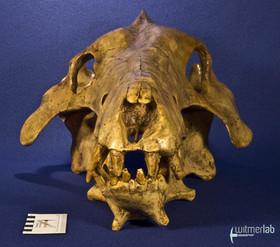 archaeotherium_DSC_0695.JPG