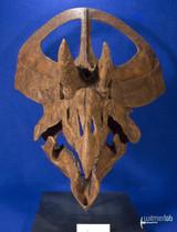 zuniceratops_DSC_2490.JPG