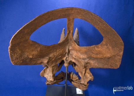 zuniceratops_DSC_2471.JPG