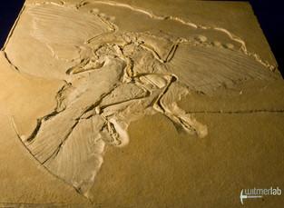 archaeopteryx_DSC_8245.JPG