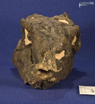 stegosaurus_DSC_0104.JPG