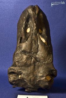 camarasaurus_DSC_9066.jpg