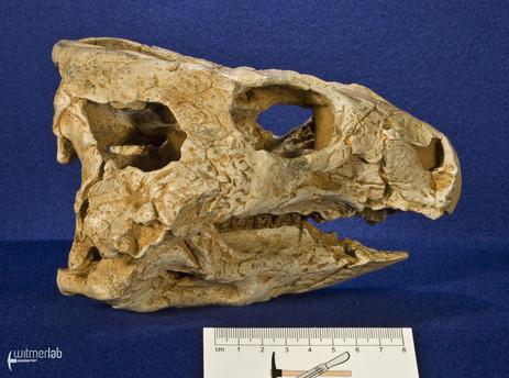 auroraceratops_DSC_1163.JPG