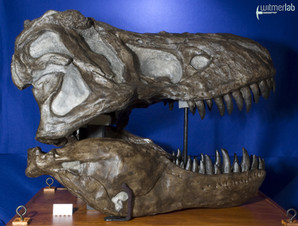 tyrannosaurus_AMNH_DSC_9614.JPG