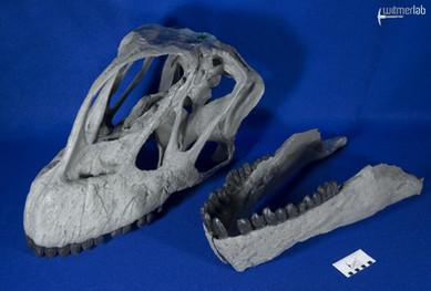 Camarasaurus_grandis_DSC_0519.jpg