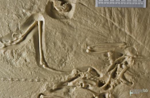 archaeopteryx_lith_DSC_2729.JPG