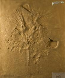 archaeopteryx_lith_DSC_8097.JPG