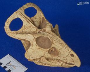 protoceratops_DSC_0693.jpg
