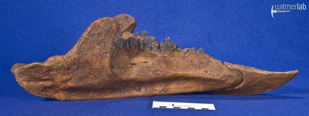 zuniceratops_DSC_2637.JPG