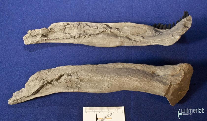apatosaurus_DSC_1842.JPG