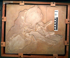 Archaeopteryx Berlin.JPG