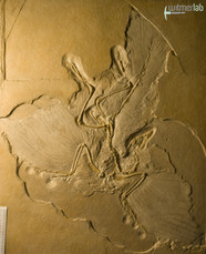 archaeopteryx_DSC_8241.JPG