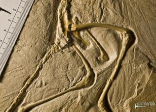 archaeopteryx_DSC_8297.JPG