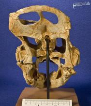 archaeoceratops_DSC_1227.JPG