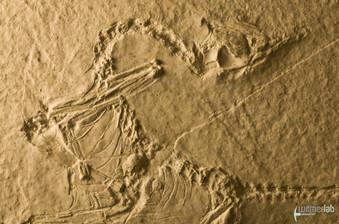 archaeopteryx_sp_DSC_8495.JPG
