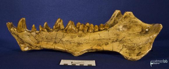 archaeotherium_DSC_0729.JPG