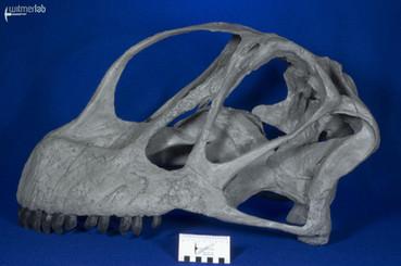 Camarasaurus_grandis_DSC_0476.jpg