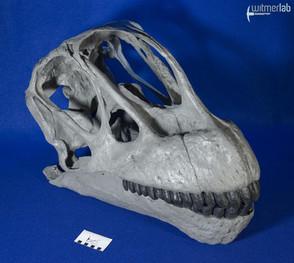 Camarasaurus_grandis_DSC_0509.jpg
